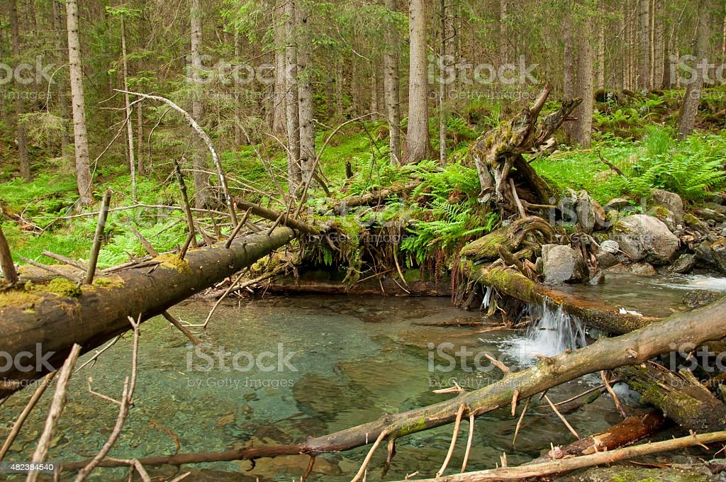 Mountain river with a small cascade in pine forest stock photo