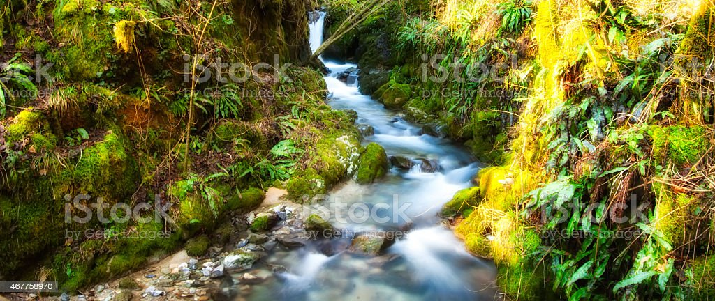 mountain river with green leaves stock photo