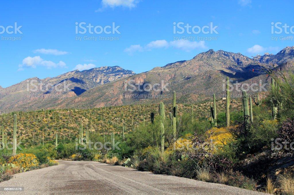 Mountain Road in Bear Canyon in Tucson, AZ stock photo