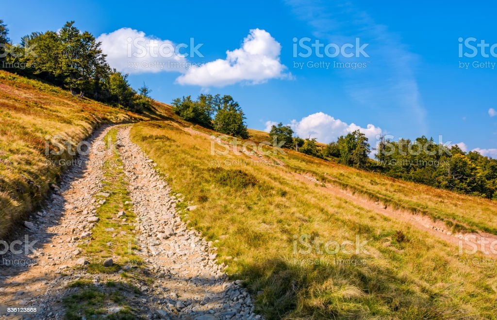 mountain road through hillside with beech forest stock photo