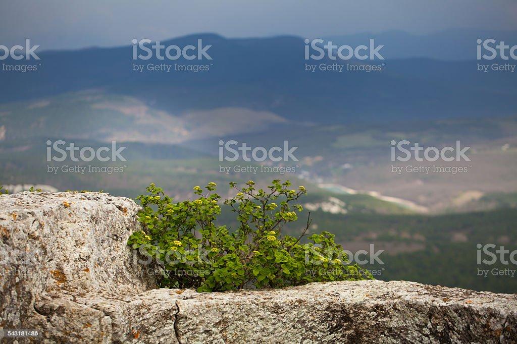mountain scene stock photo