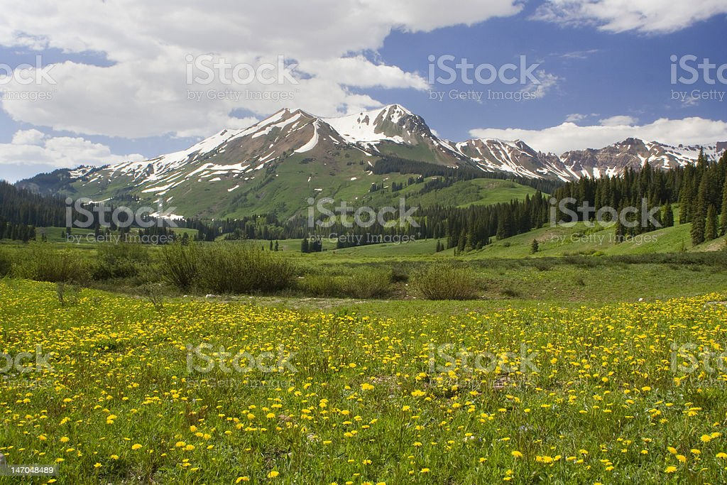 Mountain Scene with Spring Wildflowers and Trees stock photo