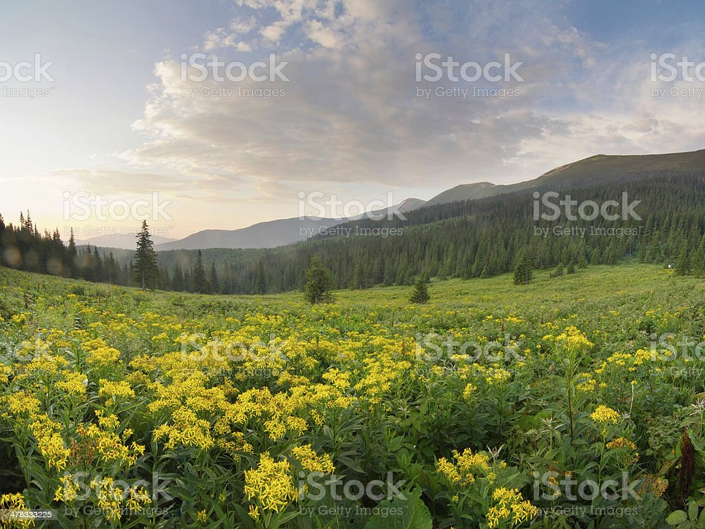 mountain scenery in Carpathians royalty-free stock photo