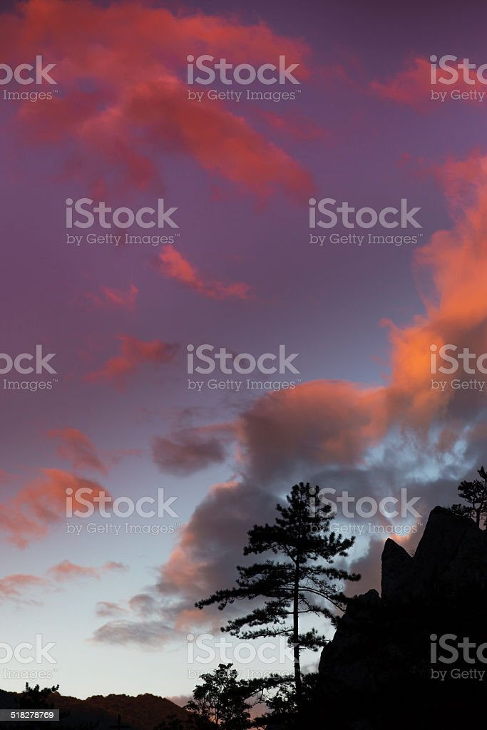 Mountain scenery with black pine tree silhouettes and sunrise sky stock photo