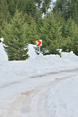 Mountain snow covered road between green fir trees, curve sign