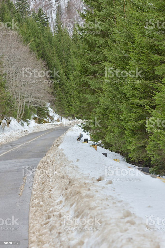 Mountain snow covered road between green fir trees stock photo