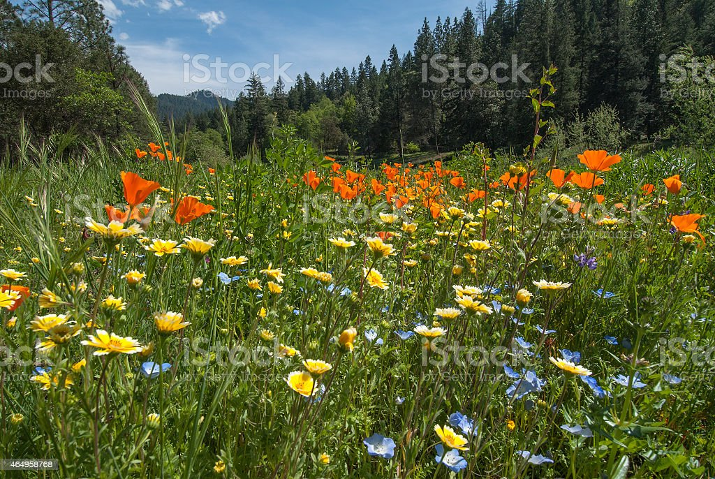 Mountain Spring Meadow stock photo