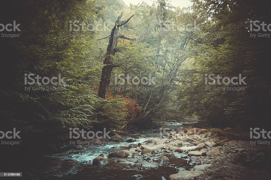 mountain stream and a dry tree on the shore stock photo