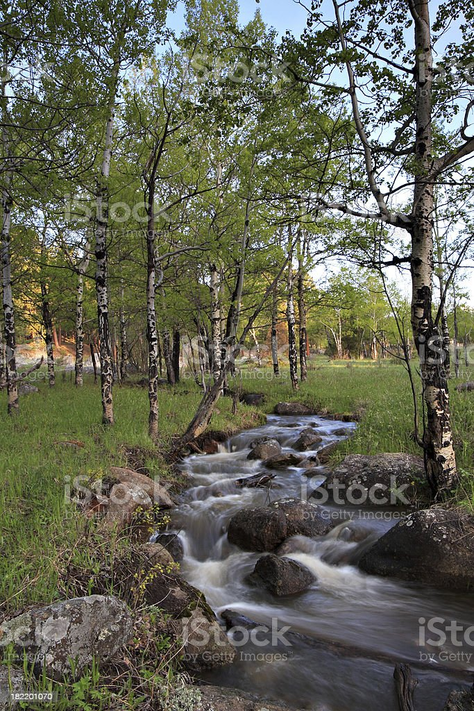 Mountain Stream And Aspen Trees In A Meadow At Sunrise stock photo