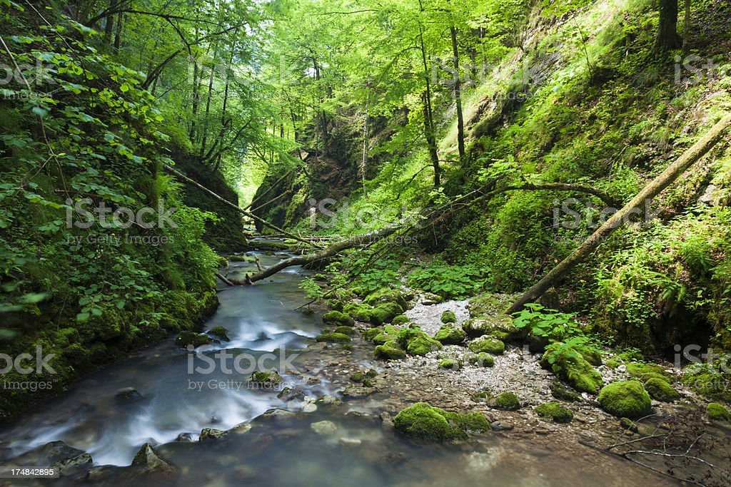 Mountain stream and lush green vegetation royalty-free stock photo