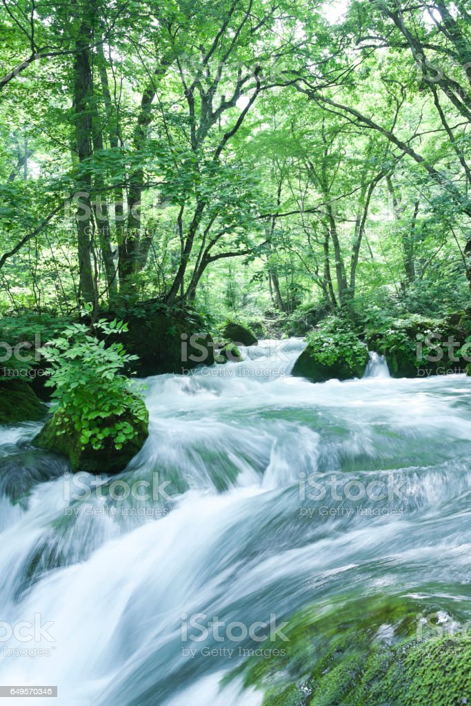 Mountain Stream Flow through Lush forest Plants stock photo