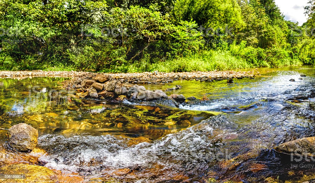 Mountain stream in a forest stock photo