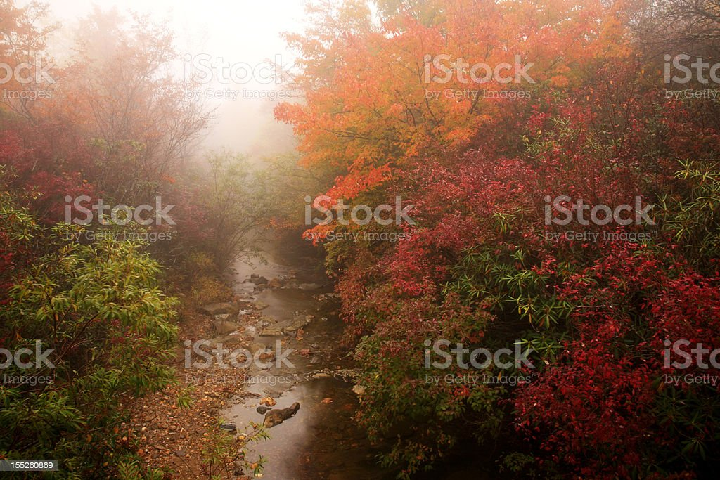 mountain stream in autumn royalty-free stock photo