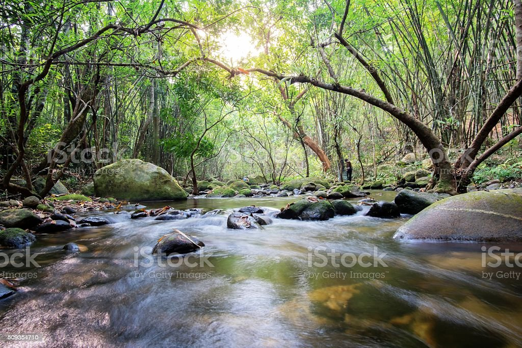 Mountain stream in green forest at spring time stock photo