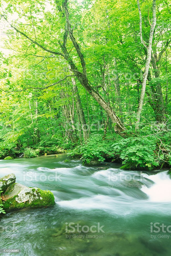 Mountain Stream in Summer royalty-free stock photo