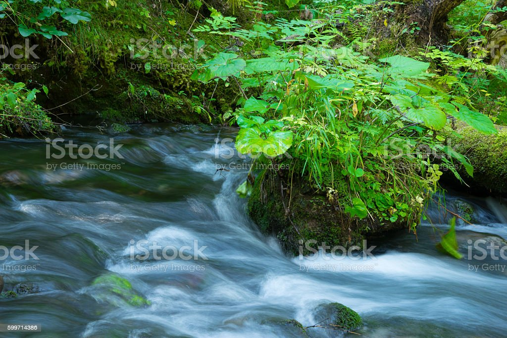 Mountain stream in the green forest stock photo