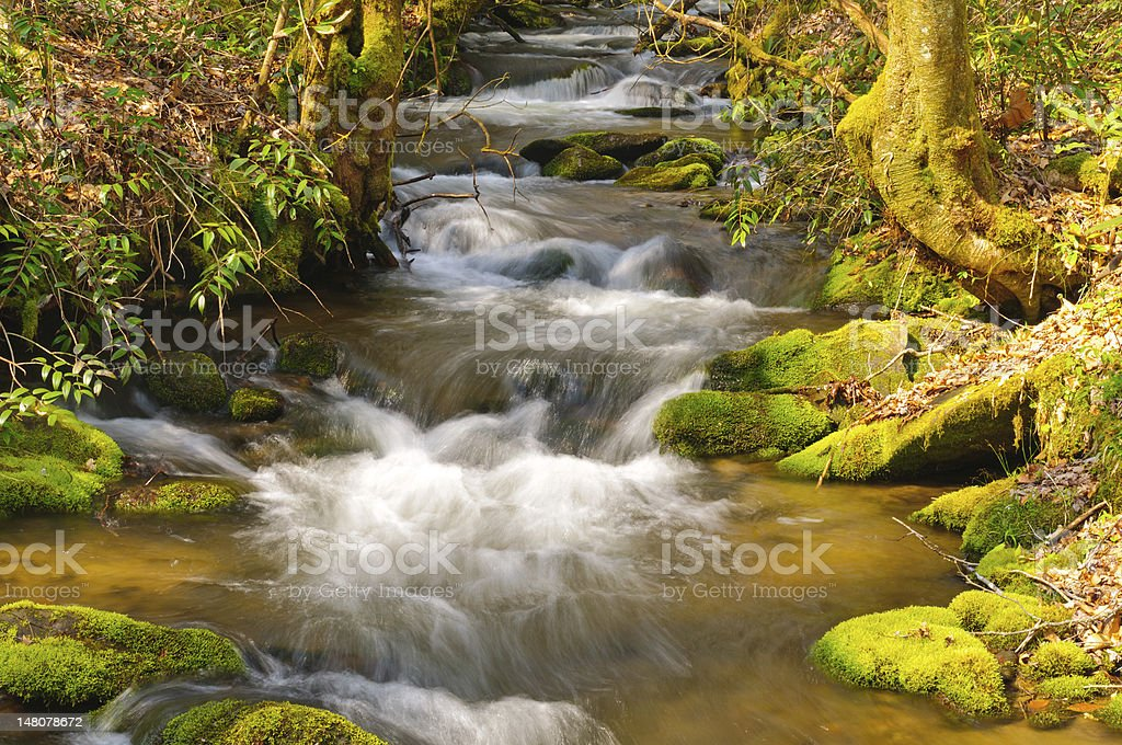 Mountain Stream on a spring morning royalty-free stock photo