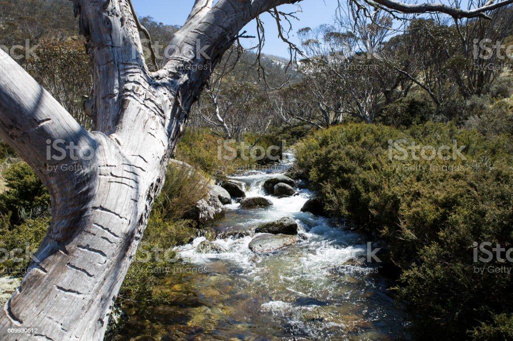 Mountain Stream, Thredbo Village stock photo