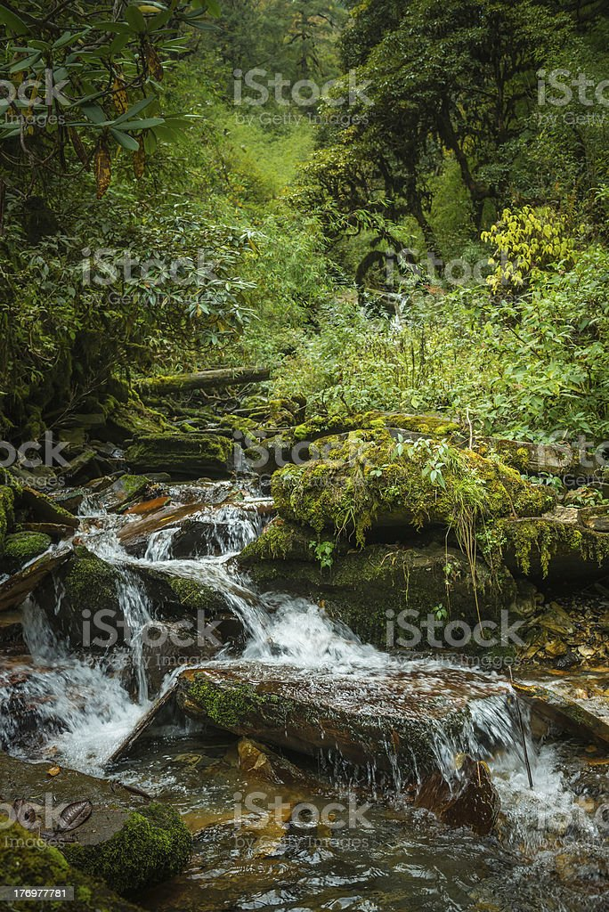 Mountain stream waterfalls in lush green rainforest jungle wilderness Himalayas royalty-free stock photo