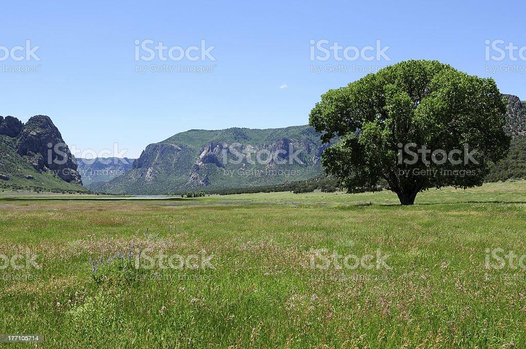 Mountain Summer Ranch stock photo