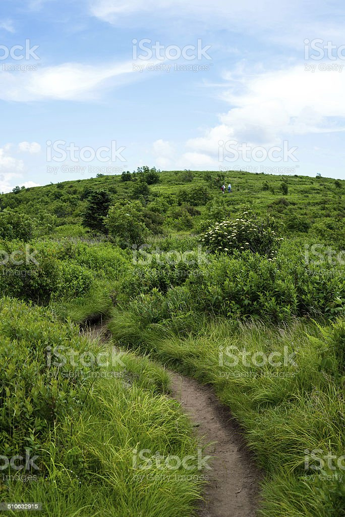 Mountain top meadow stock photo