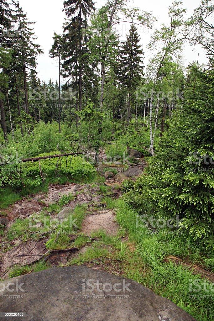 Mountain trail in a Grand Szczeliniec stock photo