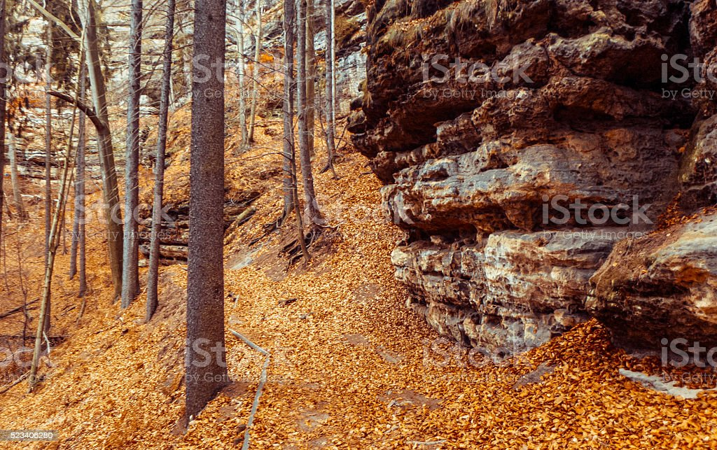 Mountain trail in forest stock photo