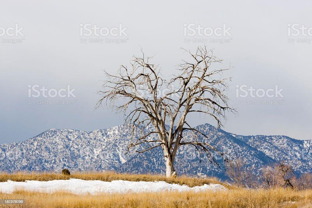 Mountain Tree stock photo