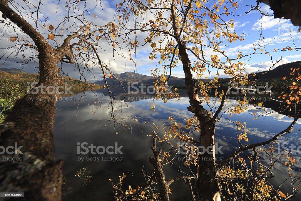 Mountain trees in colours stock photo