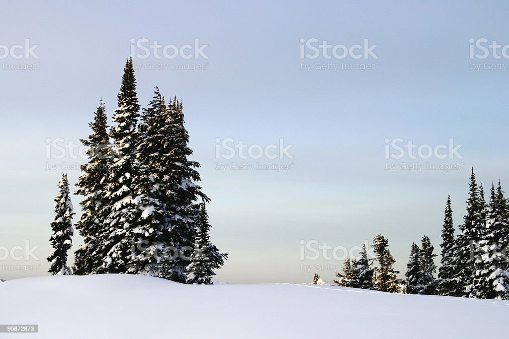 Mountain Trees in the Morning royalty-free stock photo