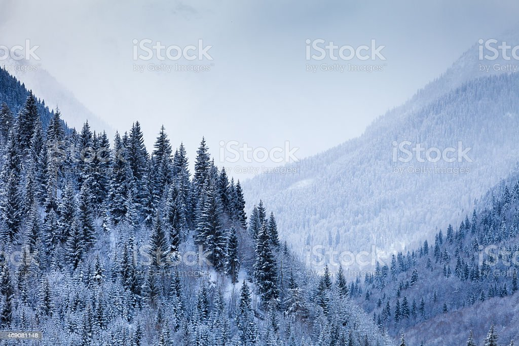 Mountain Valley with coniferous trees covered by snow stock photo