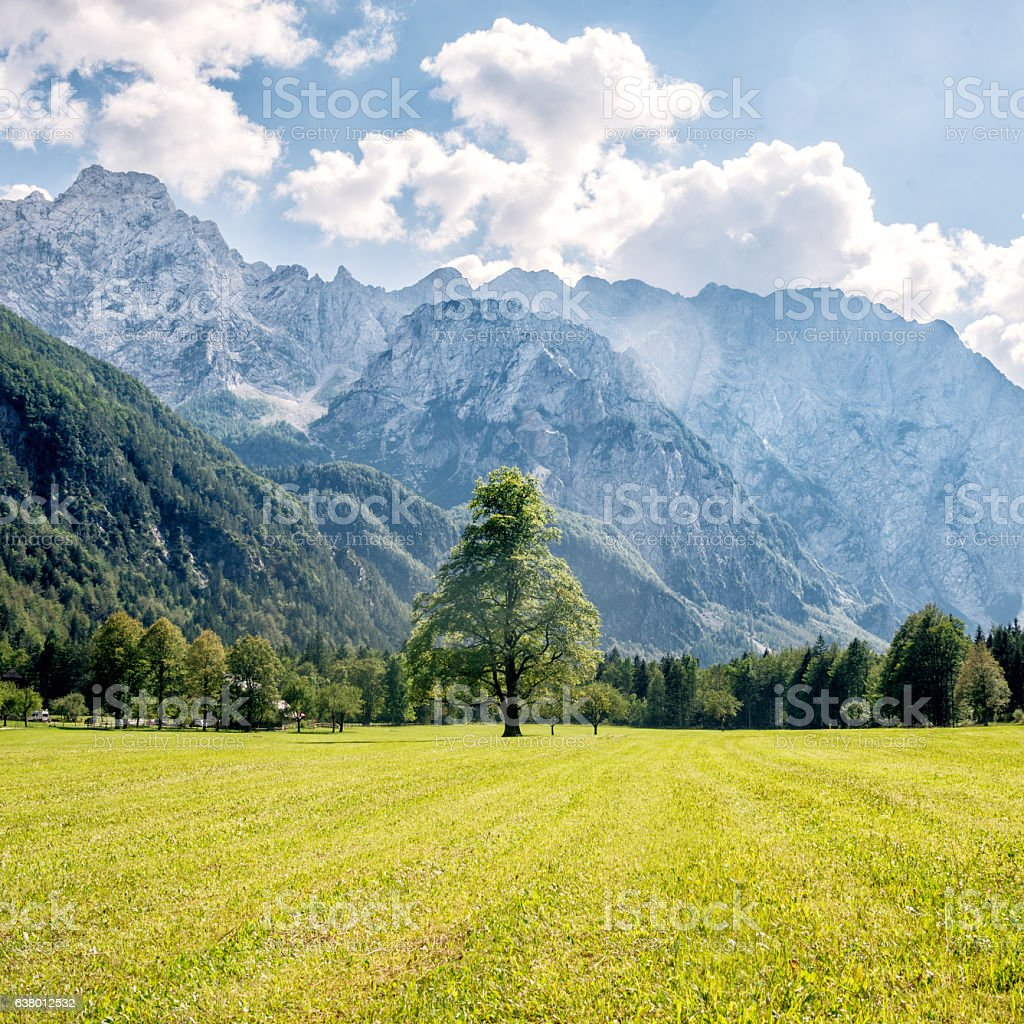 Mountain valley with green trees stock photo