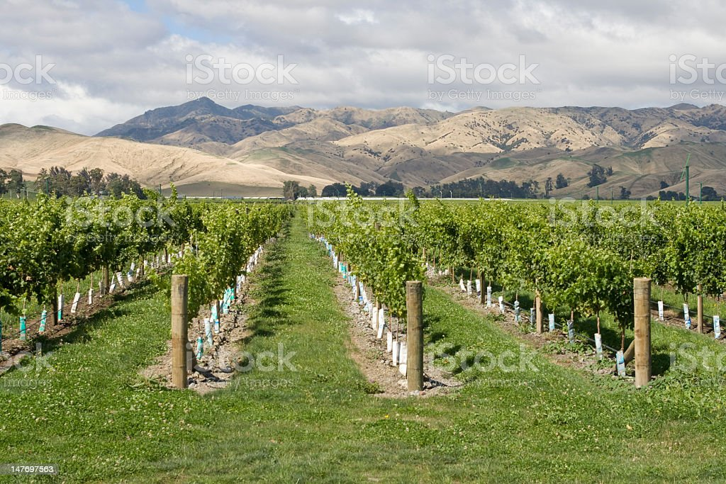 Mountain view from fields at the Marlborough vineyard stock photo