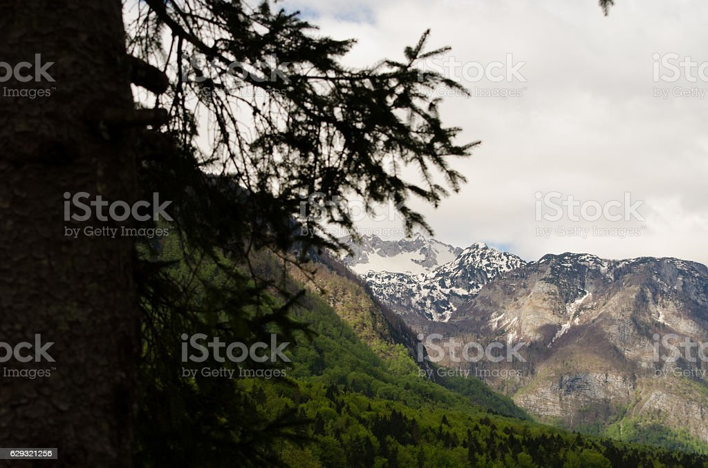 Mountain view from lake Bohinj stock photo