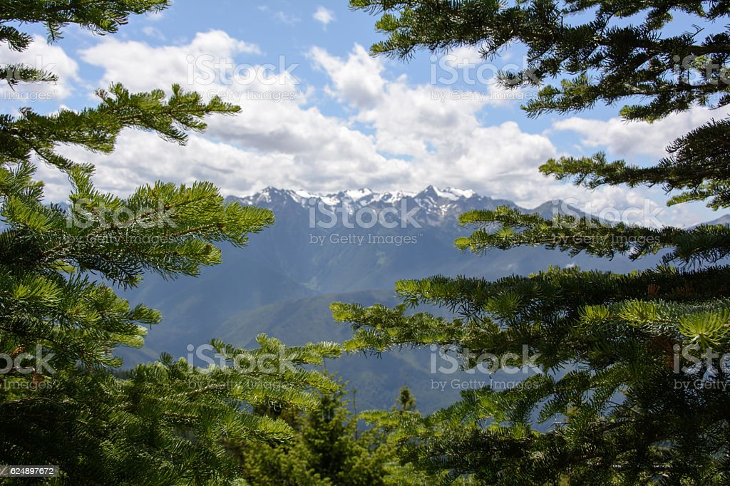 Mountain View through the branches of pine, Olympic National Park stock photo