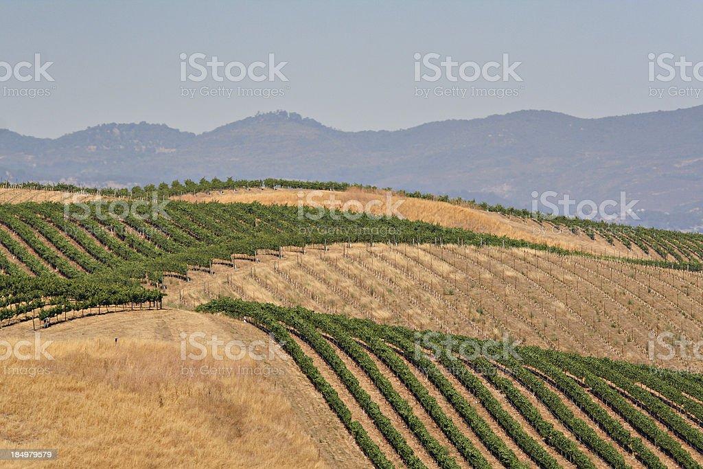 Mountain Vineyard royalty-free stock photo
