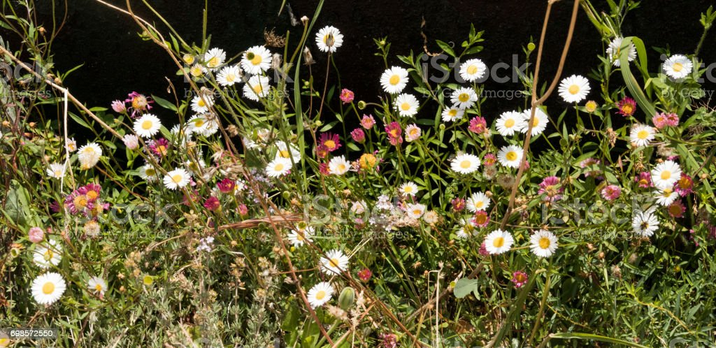 Mountain Wild Flowers stock photo