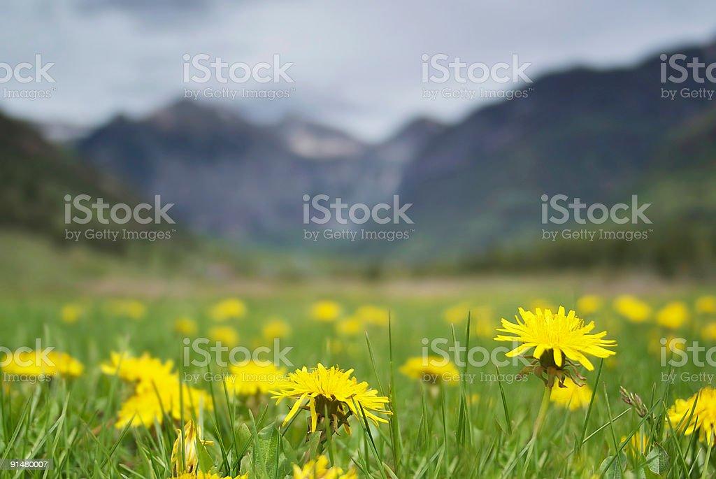 mountain wildflower landscape meadow stock photo