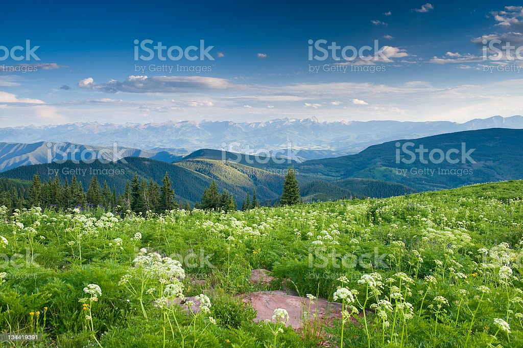 Mountain WIldflowers and Scenic Vista View in the Rocky Mountains stock photo