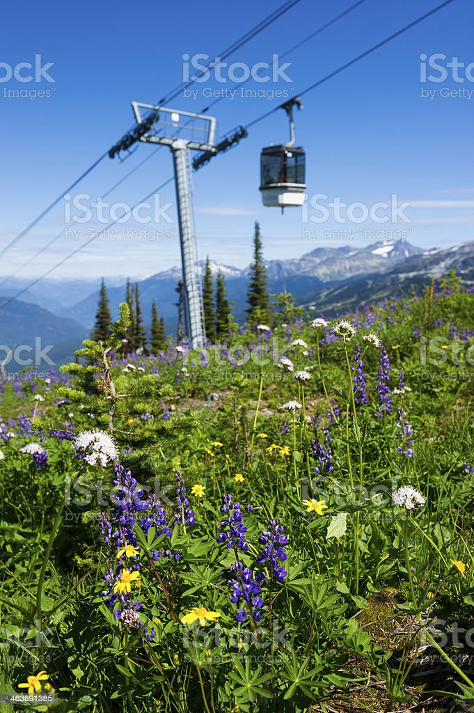 Mountain Wildflowers royalty-free stock photo