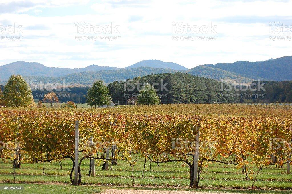 Mountain Winery stock photo