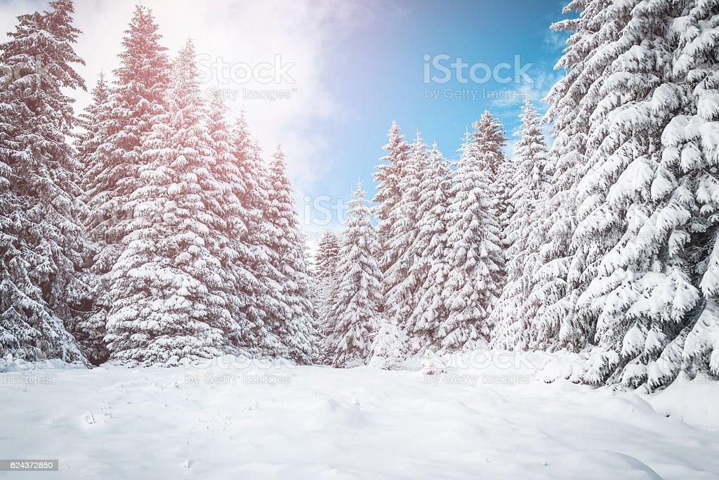 Mountain winter sunrise stock photo