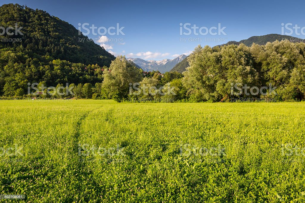 Mountain with pine trees in the foreground stock photo
