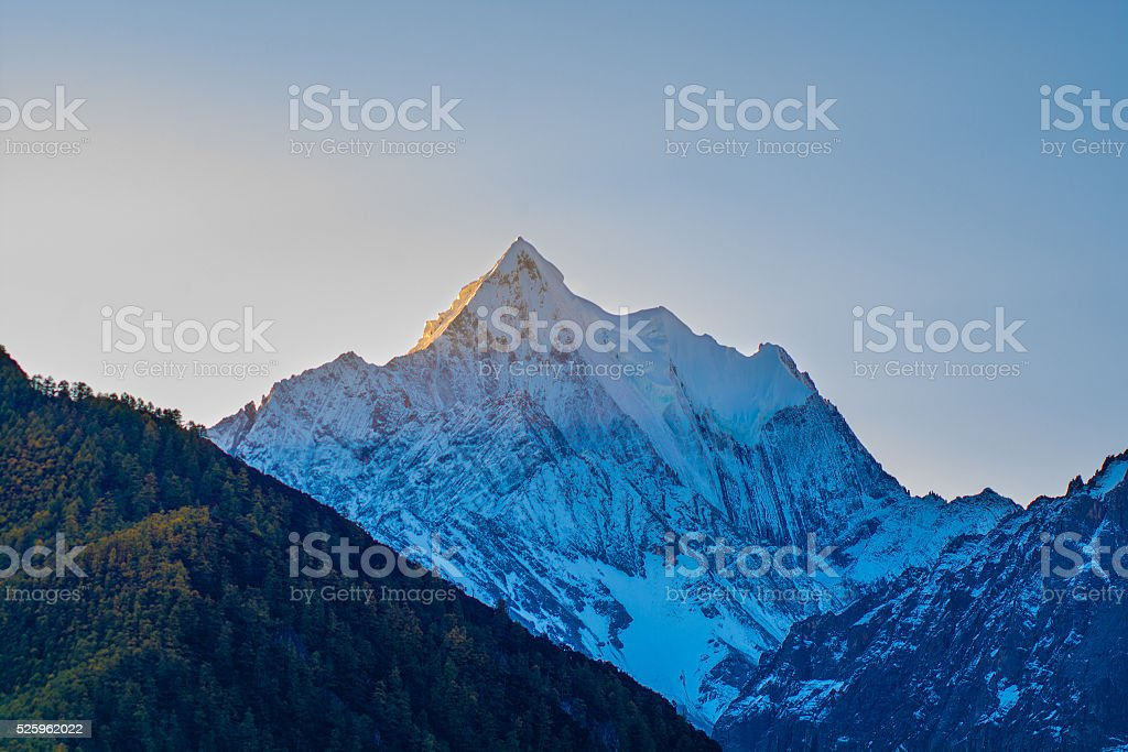 Mountain with snow and pine forest stock photo