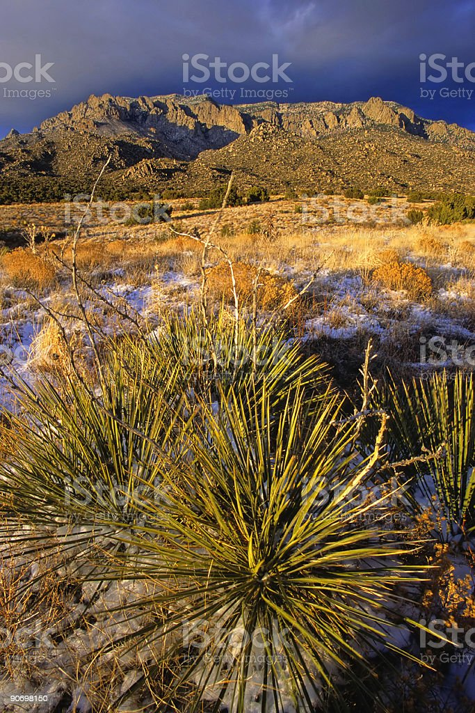 mountain yucca sunset royalty-free stock photo