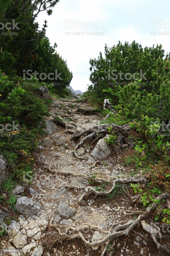 Mountaineering on a path with roots in Austria stock photo