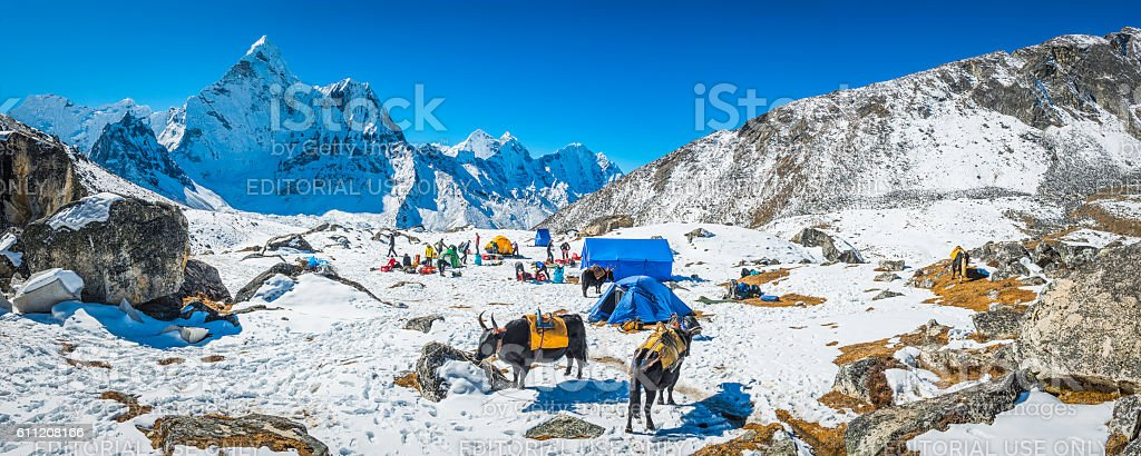 Mountaineers yaks snowy base camp beneath Ama Dablam Himalayas Nepal stock photo