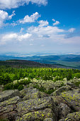 Mountains and forest of  Harz in the sunlight , Germany