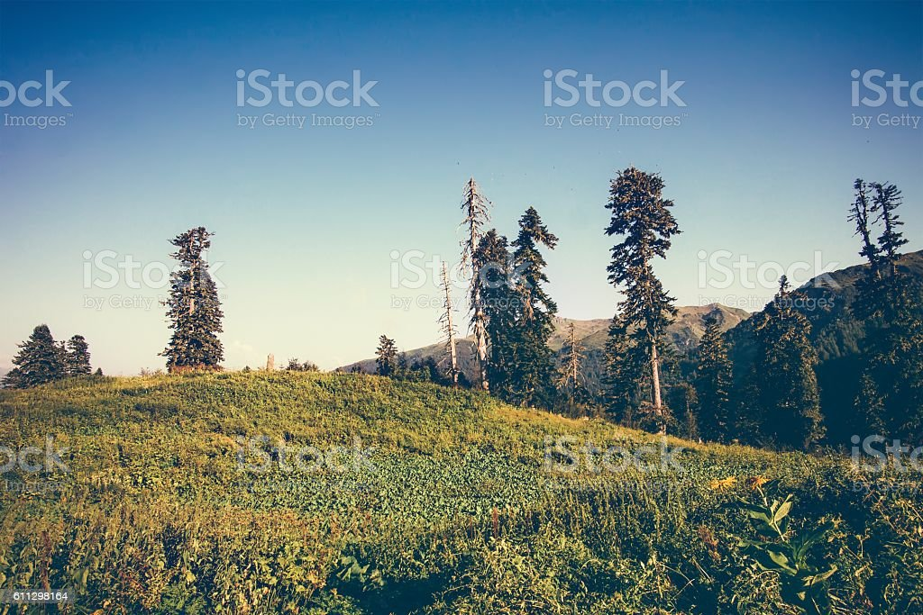Mountains and forest trees Landscape stock photo