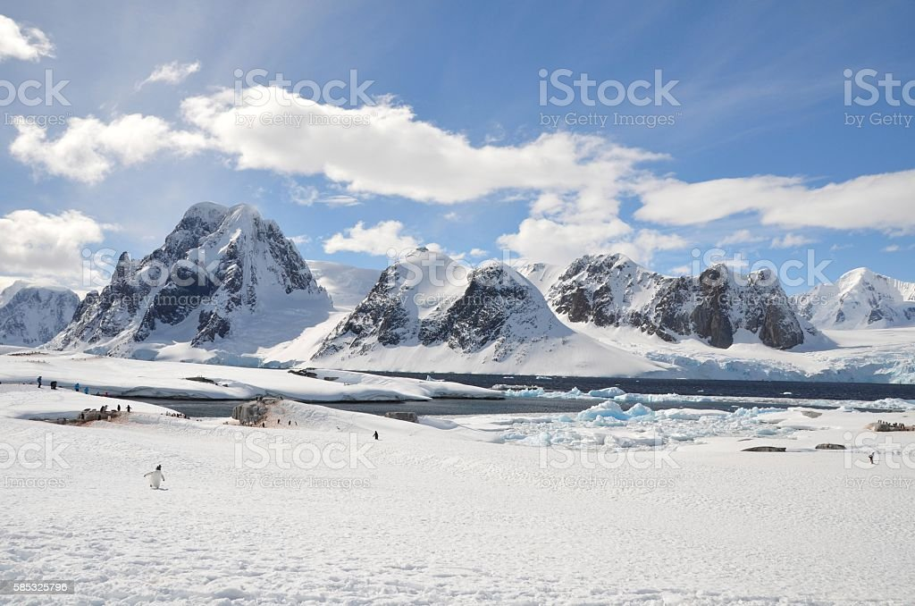 Mountains and Penguin stock photo